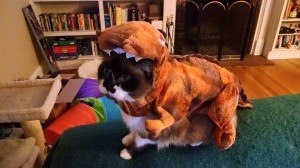 This just in: A new species of dinosaur has been discovered. It's name is the cute-osaurus Rex!